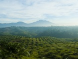 Overview of Palm Oil in Indonesia