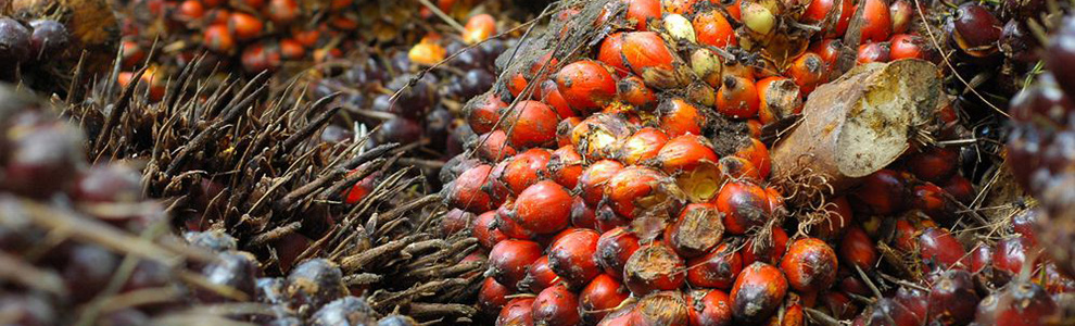 Horticulture in Indonesia: Fresh Fruits & Vegetables   GBG